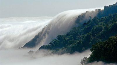 Bosque de Niebla: la maravilla natural que puedes encontrar en Chiapas