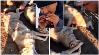 Indigna video de cazadores matando a lobos y comiéndose sus corazones