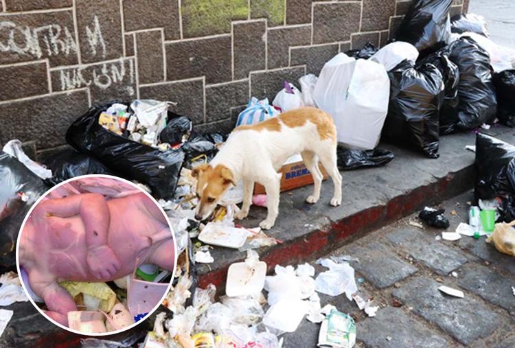 Hallan cadáver de recién nacido en la basura; se lo estaban comiendo los perros