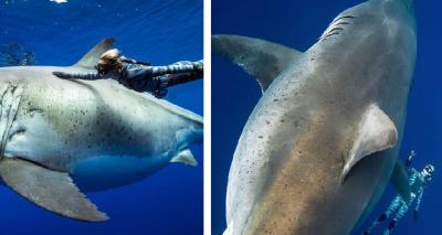 Mujer tiene peligroso encuentro con el tiburón blanco más grande del mundo