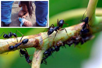 Adolescente se salva de abuso sexual gracias a una colonia… de hormigas