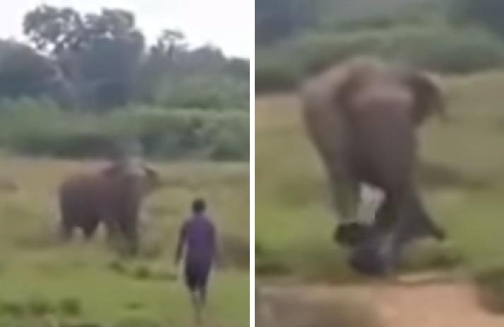 Hombre muere aplastado frente a turistas; trataba de hipnotizar a un elefante (VIDEO)