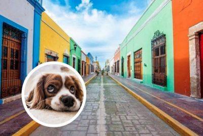 Los mejores destinos pet friendly para disfrutar con tu mascota: Campeche