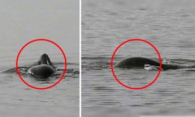 Monstruo marino causa pánico por su cabeza de serpiente y cuerpo de tortuga