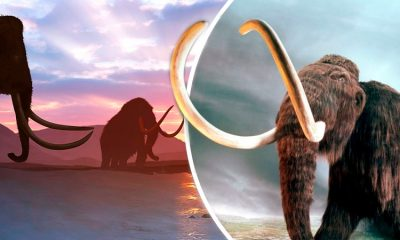 Científicos logran activar células de mamut; pretenden revivirlo