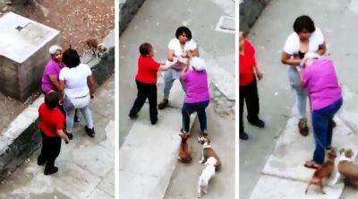 Indigna agresión a abuelita por defender a sus perros en CDMX (VIDEO)
