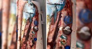 Chef halla basura al interior de un pescado que iba a cocinar. Noticias en tiempo real