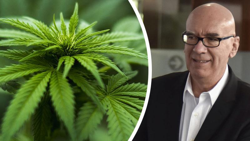 Dante Delgado pide amnistía a sentenciados por consumo de mariguana. Noticias en tiempo real