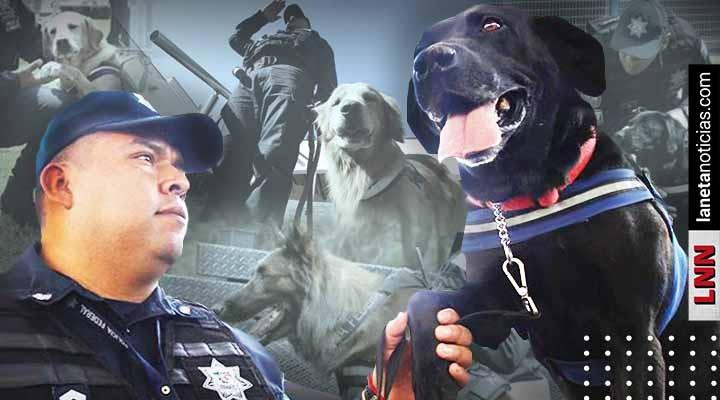 Binomios caninos Policía Federal