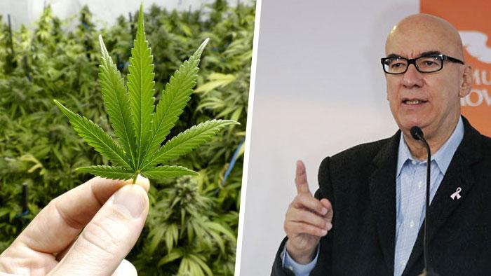 Dante Delgado aplaude aprobación de SCJN para uso medicinal del cannabis. Noticias en tiempo real