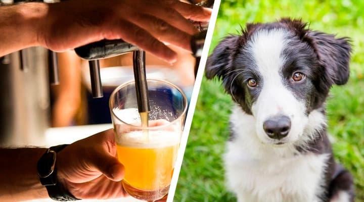Policía busca a perro que 'ayudó' a robar una cervecería. Noticias en tiempo real