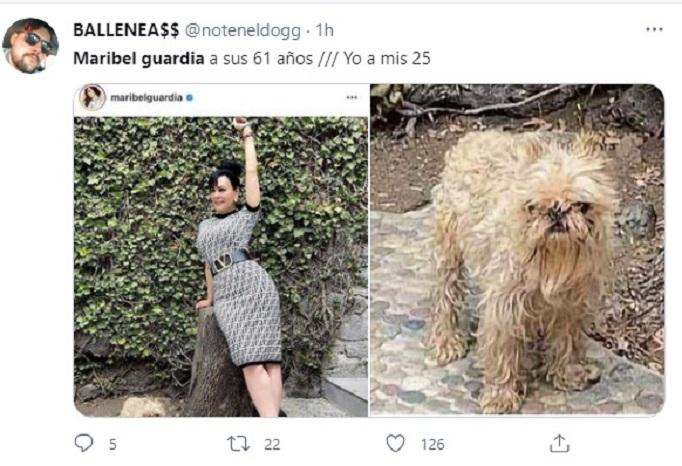 Redes reaccionan a 'mal aspecto' de perrito de Maribel Guardia (FOTO)